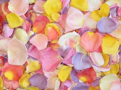 Pink Rose Petals. Pink+rose+petals+falling