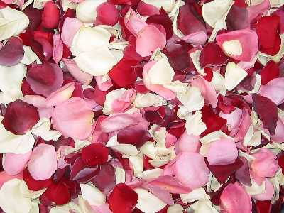 Romance: Valentine's Day mix of colors such as Burgundy, Red, Pink,
