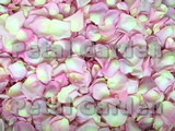Soft Pink Freeze Dried Rose Petals