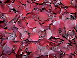 Burgundy Freeze Dried Rose Petals
