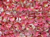 Guava Freeze Dried Rose Petals