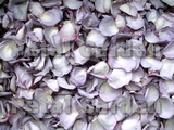 Lavender Freeze Dried Rose Petals