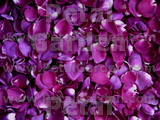 Magenta Dried Rose Petals