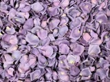 Mystic Freeze Dried Petals