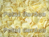 Pale Yellow Freeze Dried Rose Petals
