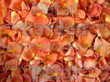 Pumpkin Freeze Dried Rose Petals