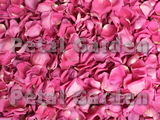 Raspberry Freeze Dried Rose Petals