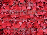 Red Freeze Dried Rose Petals