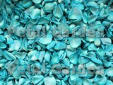 Teal Freeze Dried Rose Petals