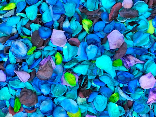 freeze dried rose petals in dyed colors