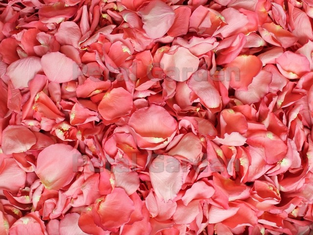 flamingo pink freeze dried rose petals