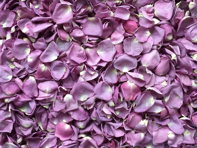 Petal garden freeze dried petals purple purple freeze dried rose petals mightylinksfo