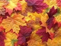 Large fall leaves