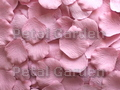 Dusty Rose Silk Rose Petals