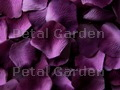 Grape Silk Rose Petals
